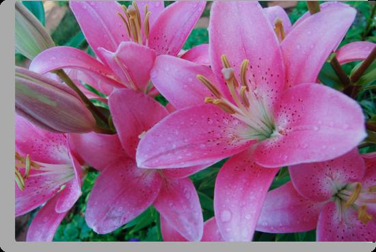 beautiful lilies by Eduard Isakov