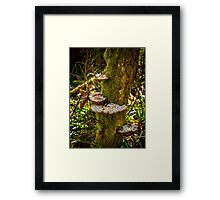 Tree Funghi Framed Print