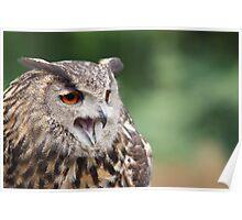 Eurasian Eagle Owl - Parc Omega - Canada Poster