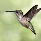 Winging It / Female Ruby Throated Hummingbird by Gary Fairhead