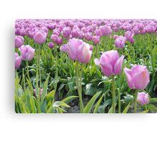 Tulip Time 6 Canvas Print