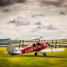 Tiger Moth by mlphoto