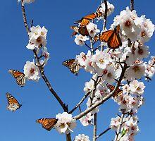 ~ Butterflies ~ by Leeo