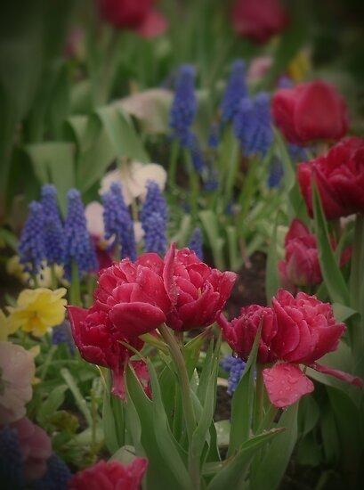 Flowers in the Garden by Lucinda Walter