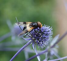 Thistle for Lunch! by MichelleRees