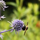 Bee hanging on to lunch! by MichelleRees