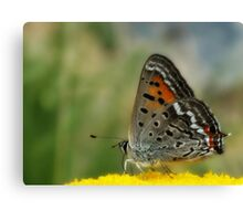 To be a butterfly in Colorado Springs... Canvas Print