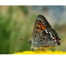 To be a butterfly in Colorado Springs... Photographic Print