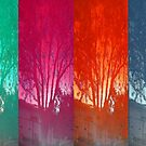 Reflections of the Four Seasons by DAdeSimone