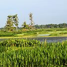 Florida`s pristine magical wetlands as it always was! by jozi1
