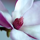 Perfect Pink Magnolia by Renee Hubbard Fine Art Photography