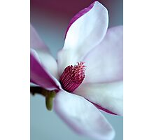 Perfect Pink Magnolia Photographic Print