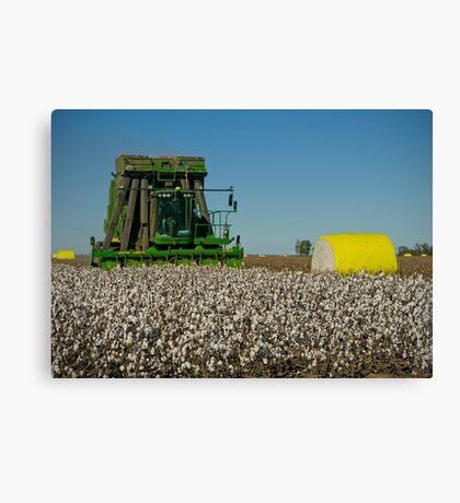 Cotton Harvest Canvas Print