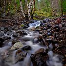 Quartzville Creek Cascading Water by Charles & Patricia   Harkins ~ Picture Oregon
