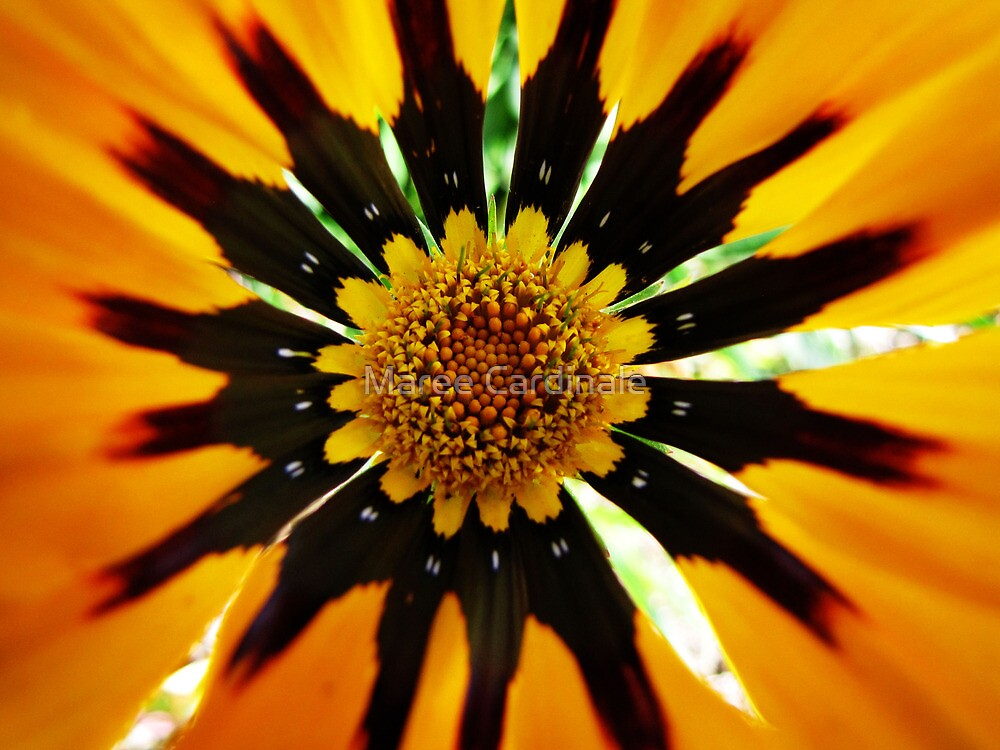 Tocumwal flower by Maree Cardinale