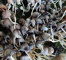 Autumn park mushrooms by Bluesrose