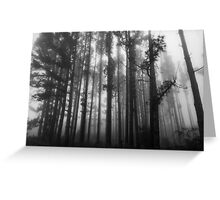 Foggy Trees - Mt Stromlo, Canberra Greeting Card