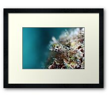 Bonaire Blenny Framed Print