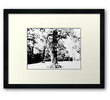 Black and White Tree Framed Print