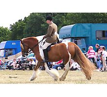 Chestnut Vanner with Rider Photographic Print