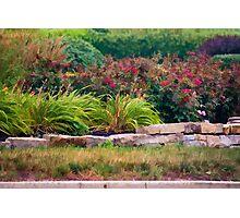Neighborhood Garden Photographic Print