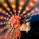 Scorpion Fish by Carlos Villoch