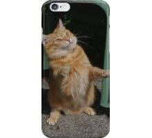 Playful cat iPhone Case/Skin