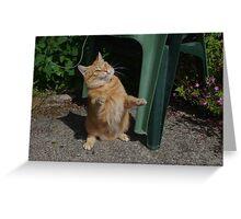 Playful cat Greeting Card