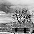 Old abandoned Idaho by DiamondCactus