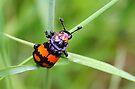 Beetle Transport by Jo Nijenhuis