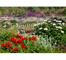 Flower - Poppy - Poppies  Photographic Print