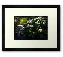 Flower - Rose - By a wall  Framed Print
