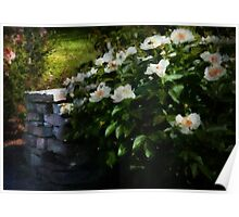 Flower - Rose - By a wall  Poster