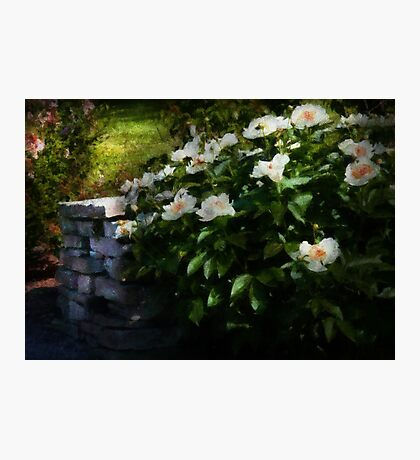 Flower - Rose - By a wall  Photographic Print