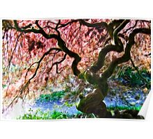 Acer Abstract Poster