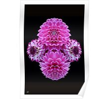 Pink Dahlia Mirror Poster