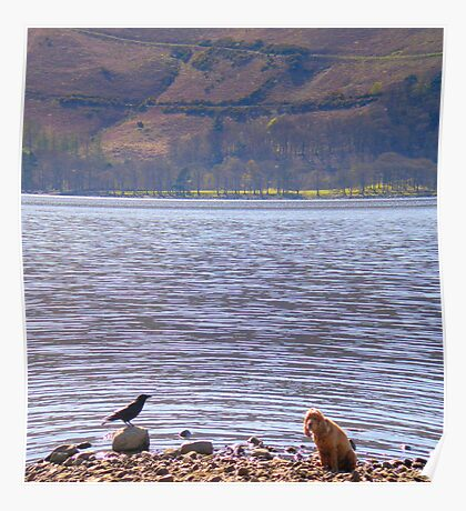 Devoted dog and mocking bird-Lake District Poster