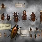 Bug Collector - The insect Collection  by Mike  Savad