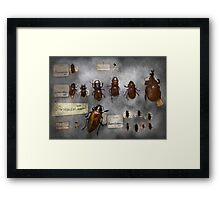 Bug Collector - The insect Collection  Framed Print