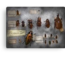 Bug Collector - The insect Collection  Canvas Print