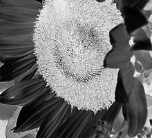 Inverted Monotone Sunflower  by Glenn Cecero