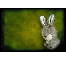 One Bunny Photographic Print