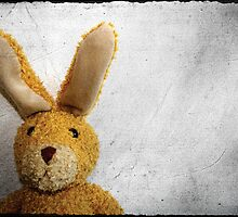 Hase by henribanks