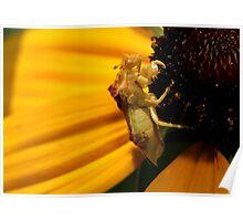 Jagged Ambush Bug Poster