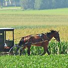 A Buggy Ride by lorilee