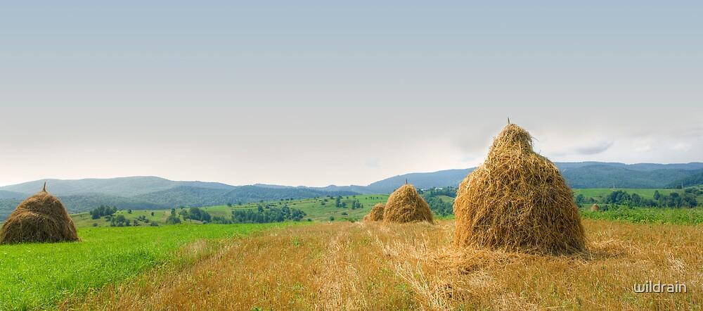 Hayrack panorama by wildrain