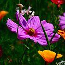 Wild Flowers by Paul Revans