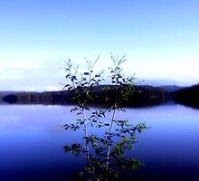 Thomson Reservoir by Chris Chalk