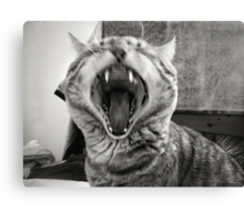 I am NOT HysteriCAAAT !!! ¬¬' Canvas Print
