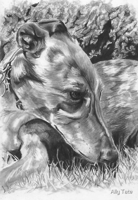 Grey Hound by Ally Tate